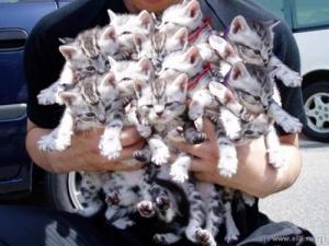 Od Vivy: Plná náruč kočiček