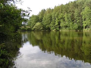 Náš lesní rybník